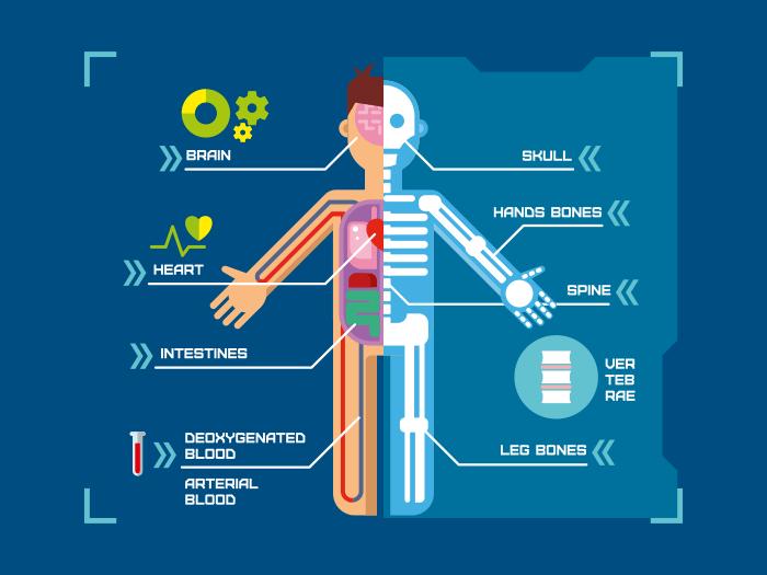 Human body anatomy infographic flat illustration