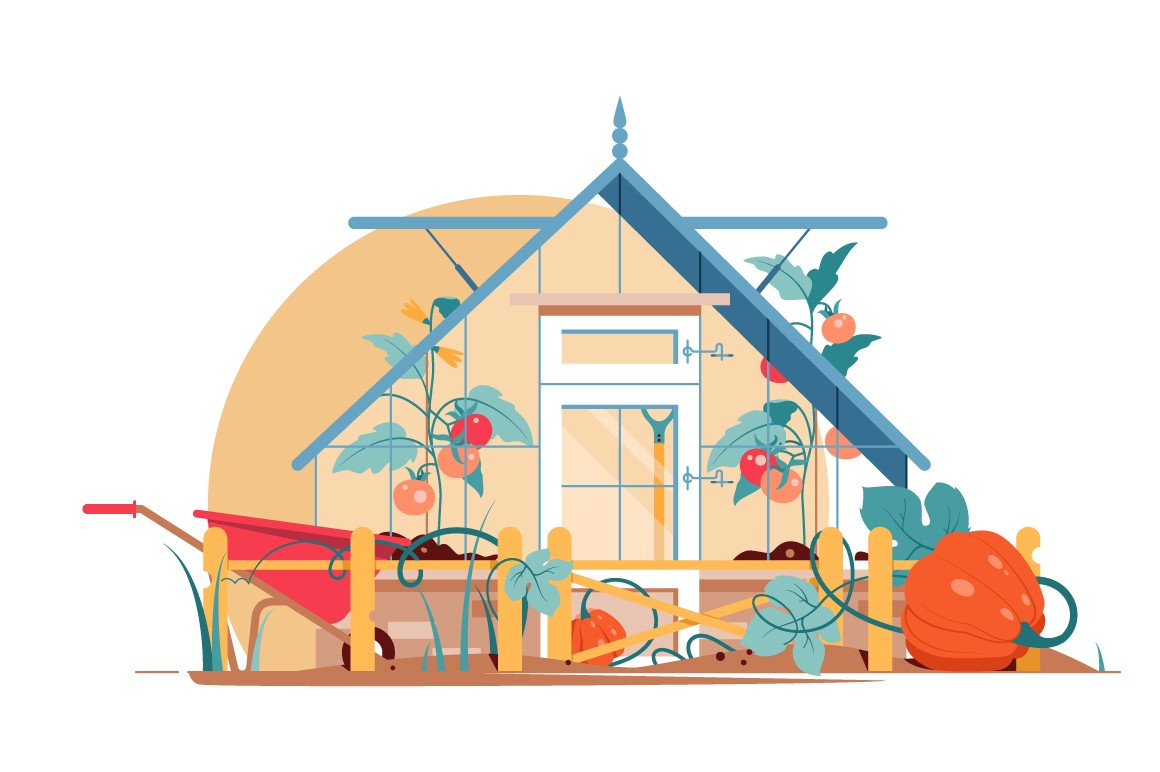 Garden with tomatoes and pumpkins vector illustration.