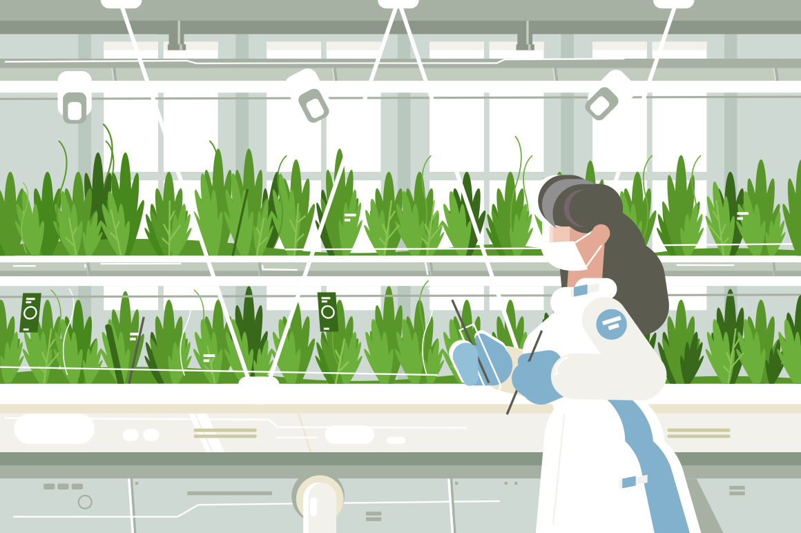 Eco farm with aquaponics system of planting vegetable. Growing plants in the greenhouse flat style concept vector illustration. Girl in special white suit. Crops on background