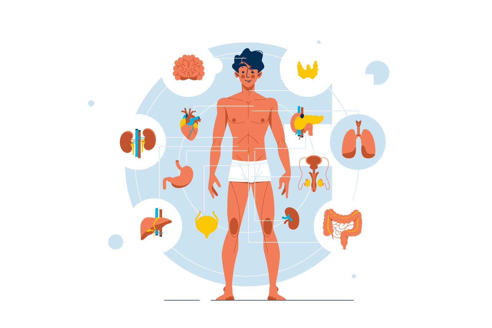 Human body anatomy and structure vector illustration. Visual scheme of healthy human internal organs flat style. Medical and biology concept